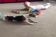 Hunde und Babys