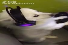 Der Hund schaut Video