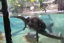 Faule Schildkröte