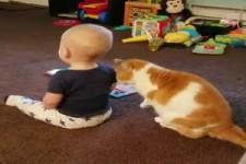 Kinder und Katzen