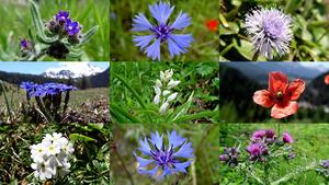 In de vrije natuur - In der offenen Natur (Blumen)