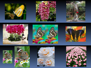 Flowers - Butterflies 5