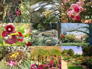 Botanischer Garten Ein Gedi -Israel