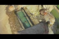 Monkey Learns to High Dive.