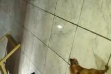 Genialer Hund, dressiert auf Geld