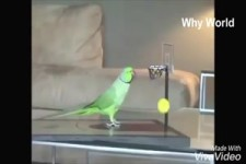 talentierte Vögel haben Spaß