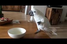 Yoghurt moment