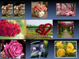 Flower Story 2