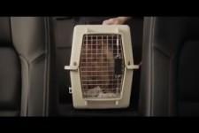 Ausgebufftes Kätzchen