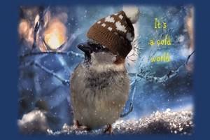 It's A cold world - Es ist eine kalte Welt