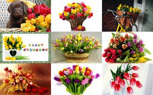 Tulip Bouquets 2 - Tulpensträuße 2