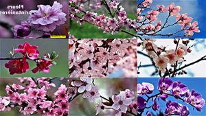 Fleurs printanières - Frühlingsblumen
