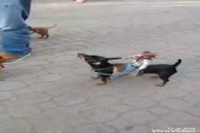Hundecowboys
