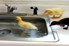Tiere und Wasser