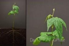Pflanzen-Wachstum