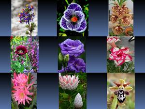 Beautyful Flowers