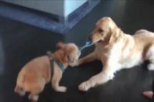 Lustige Hunde