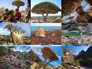 Socotra Insel -Jemen