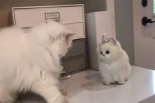 Katze gegen Spielzeug-Katze