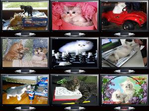 Insolite 364 - Ungewöhnliche 364 (Katzen)