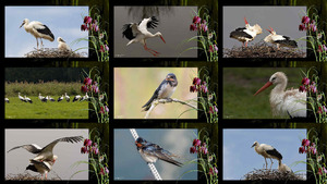 Voorjaar - Vlindertjes in de buik - Frühling...