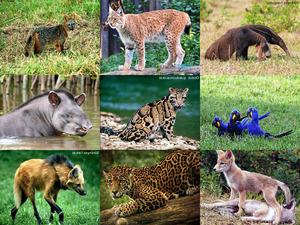 Pantanal - Brasilen 2