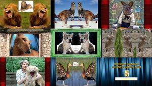 Lustige Hybrid- und andere Tiere