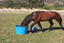 Lustige Pferde