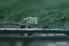 Tanzende Tiere