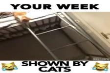 deine Woche aus Sicht einer Katze