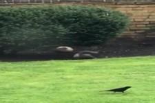 Das Eichhörnchen und der Ball