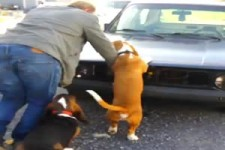 Spaß mit Hunden