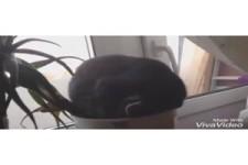 Lustige Katzen II