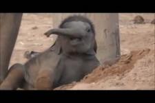 Ein Monat alter Baby-Elefant