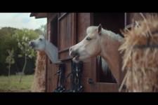 Da lachen doch die Pferde