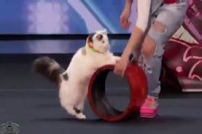 Dressierte Katzen