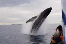 Irgendwo müssten die Wale hier sein
