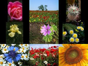 Bilder-Galerie vom 09062018 3 Blumen