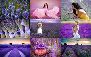 Lavender Ladies - Lavendel Damen