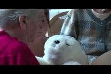 Robbe Emma -Wie ein kleines Tier in einem Seniorenheim hilft