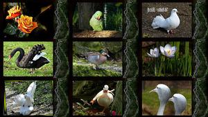 White Bird - Weißer Vogel