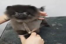 Beim Hunde-Friseur