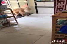 die Katze war´s