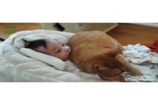 Tiere und kleine Kinder