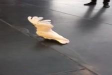 Hund oder Kakadu?