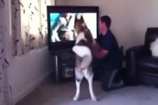 Hund versucht seinen Menschen zu schützen