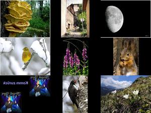 Bilder-Galerie vom 24022018 1