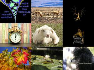 Bilder-Galerie vom 24052018 10