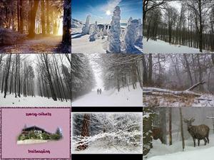 Bilder-Galerie vom 27012018 6 Wald im Winter