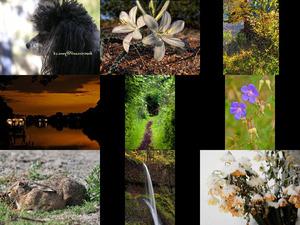 Bilder-Galerie vom 29032018 1